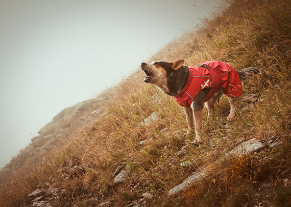 Hurtta Raincoat Red On Dog Podgy Paws