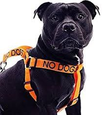 No Dog harness